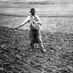 semer gazon, entretien gazon planter gazon semer a la volée, semer pelouse, pelouse a semer