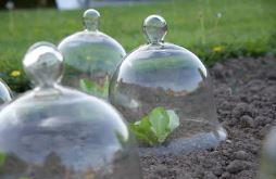 culture hâtée cloche de jardinage